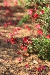 garden1021_59