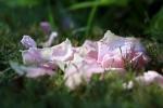 garden1021_64