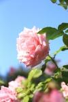 garden1021_66