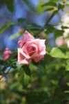 garden1021_67