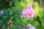 garden1021_68