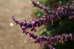 garden1021_70