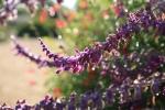 garden1021_7