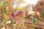 garden1205_14