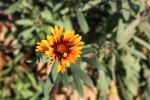garden122914 (12)