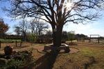 garden1229_9