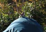 garden0106_14