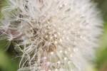 garden01_16_5