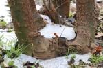 snow0225_81