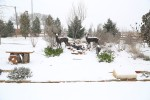 snow0227_45