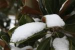 snow0227_55