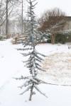 snow0227_71