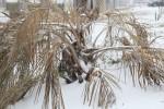 snow0227_76