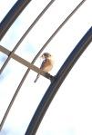 birds0306_2
