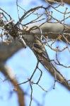 birds0306_4