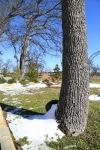 snow0305_11