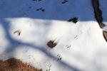 snow0305_24