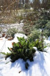 snow0305_8