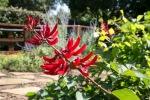 garden0527_11