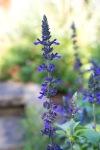 garden0527_15