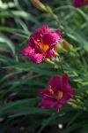 garden0527_3