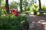 garden0527_4