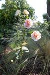 garden0527_9