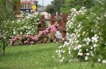spring0505_5