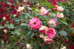 spring0506_4