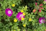 spring0506_9