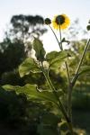 garden0717_4