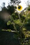 garden0717_6