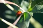 ladybug0729