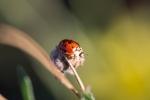 ladybug0729_1