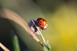 ladybug0729_2