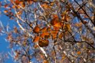 fall_29