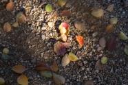 fall_30