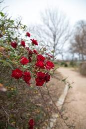 garden012615_1