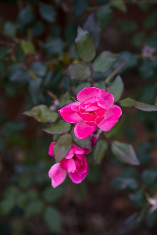 garden012615_12