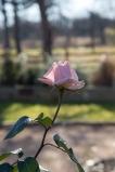 garden012615_16