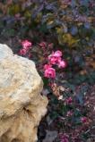 garden012615_9