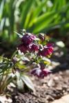 garden022616_30