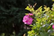 garden_31