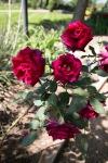 garden041516_22