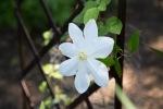 garden041516_42