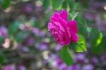 garden041516_51