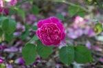 garden041516_52