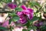garden041516_56