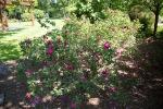garden041516_58