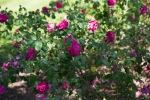 garden041516_59